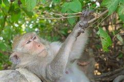 Porträt eines Affen in den wild lebenden Tieren Lizenzfreie Stockfotos