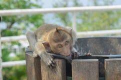 Porträt eines Affen in den wild lebenden Tieren Lizenzfreies Stockfoto