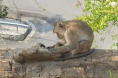 Porträt eines Affeschlafes auf der Wand Lizenzfreies Stockbild