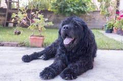 Porträt eines alten schwarzen Hundes im Hinterhof Stockfotos