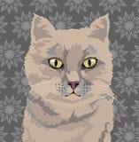 Porträt einer beige Katze auf einem Retro- Hintergrund Stockbilder