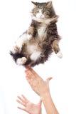 Porträt eines flaumigen Kätzchens des netten Fliegens Lizenzfreies Stockfoto