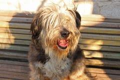 Porträt eines flaumigen Schwarzweiss-Hundes lizenzfreies stockbild