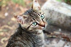 Porträt eines grauen gestreiften Kätzchens Stockfotos