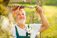 Porträt eines hübschen älteren Mannes, der in seinem Garten im Garten arbeitet lizenzfreies stockfoto