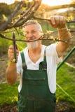 Porträt eines hübschen älteren Mannes, der in seinem Garten im Garten arbeitet Stockfotografie