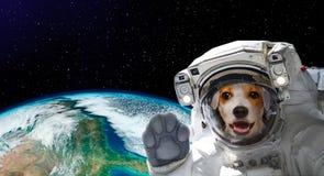 Porträt eines hübschen Hundeastronauten im Raum auf Hintergrund der Kugel stockbild