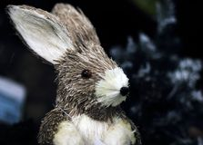 Porträt eines Hasen Stockfotos