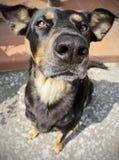 Porträt eines Hundes Stockfotografie