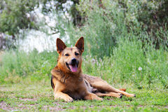 Porträt eines Hundes Stockfoto