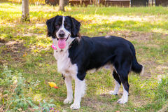 Porträt eines Hundes Stockbilder