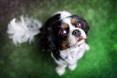 Porträt eines Hundes Lizenzfreie Stockbilder