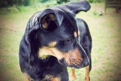Porträt eines Hundes Lizenzfreies Stockbild