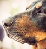Porträt eines Hundes Stockfotos