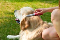 Porträt eines Hundes beim der Wolle draußen säubern lizenzfreie stockfotografie