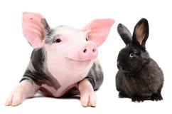 Porträt eines lustigen kleinen Schweins und des netten schwarzen Kaninchens Stockfotografie