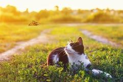 Porträt eines netten Kätzchens, das im Gras in einer sonnigen Wiese liegt und einen schönen fliegenden Schmetterling an einem  stockfotografie