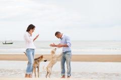 Porträt eines Paares mit Hunden Lizenzfreie Stockbilder