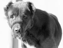 Porträt eines schwarzen Hundes auf der Natur Stockfoto