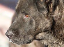 Porträt eines schwarzen Hundes auf der Natur Stockfotografie