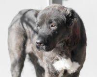 Porträt eines schwarzen Hundes auf der Natur Lizenzfreies Stockbild