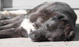Porträt eines schwarzen Hundes auf der Natur Lizenzfreie Stockfotos