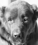 Porträt eines schwarzen Hundes auf der Natur Lizenzfreie Stockbilder