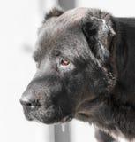 Porträt eines schwarzen Hundes auf der Natur Lizenzfreies Stockfoto