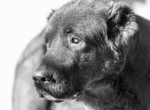 Porträt eines schwarzen Hundes auf der Natur Stockbilder
