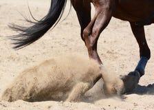 Porträt eines Sportpferds, das durch Hürde auf blauer Himmel backgroundLegs eines Sportpferds auf Galopp im Sand springt Dressage Stockfotografie