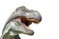Porträt eines Tyrannosaurus rex auf weißem Hintergrund Stockfoto