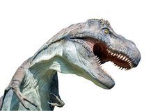 Porträt eines Tyrannosaurus rex auf weißem Hintergrund Lizenzfreies Stockfoto