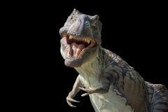 Porträt eines Tyrannosaurus rex onblack Hintergrundes Lizenzfreies Stockbild