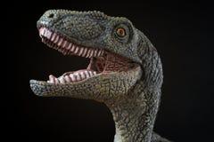 Porträt eines Velociraptor auf schwarzem Hintergrund Stockbild