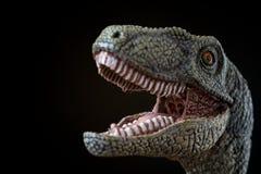 Porträt eines Velociraptor auf schwarzem Hintergrund Lizenzfreies Stockbild