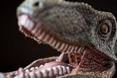 Porträt eines Velociraptor auf schwarzem Hintergrund Stockfotos