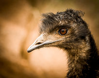 Porträt eines Vogels Lizenzfreies Stockbild