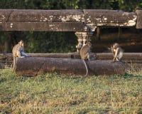 Porträt mit drei Affen Stockfoto