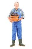 Porträt in voller Länge eines Vintner, der einen Eimer Trauben hält lizenzfreie stockfotos