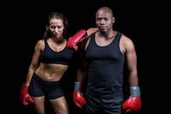 Porträt von überzeugten Boxern Stockfotografie