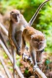 Porträt von Affen in einem Regenwald Lizenzfreie Stockbilder