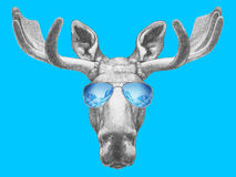 Porträt von Elchen mit Spiegelsonnenbrille Stockfotografie