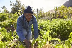 Porträt von Gärtner-Working In Community-Zuteilung Lizenzfreie Stockfotos
