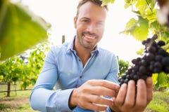 Porträt von lächelnden rührenden Trauben des jungen Mannes stockfoto
