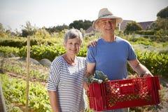 Porträt von reifen Paaren mit Kiste Erzeugnis auf Zuteilung lizenzfreie stockfotografie