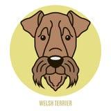 Porträt von Waliser Terrier Lizenzfreies Stockbild