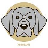 Porträt von Weimaraner Lizenzfreie Stockfotografie