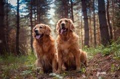 Porträt von zwei Hunde Stockbild
