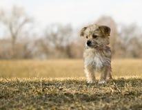 Porträt Yorkshires Terrier auf einem Hügel Lizenzfreie Stockbilder