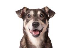 Porträtfoto eines entzückenden nicht reinrassigen Hundes lokalisiert auf Weiß lizenzfreie stockbilder